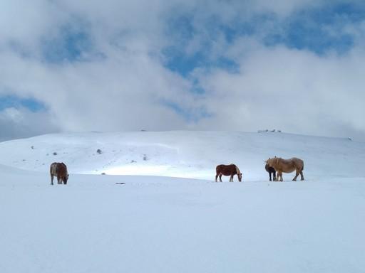 cantal guide accompagnateur montagne randonnée