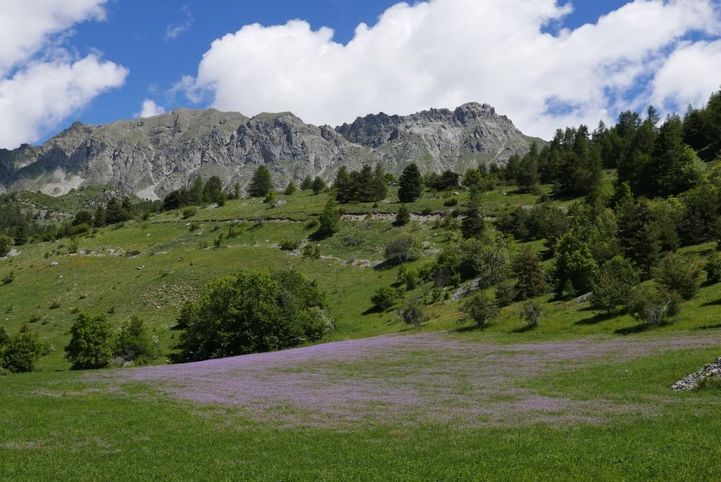 alpes guide accompagnateur randonnée montagne alpes du sud hautes alpes queyras écrins champsaur